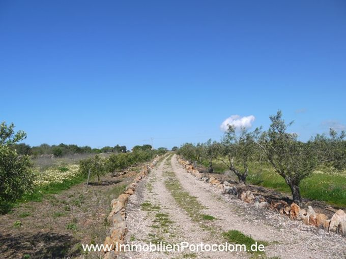 Property Building plot in Ses Salines - Finca in Ses Salines close to Santanyi